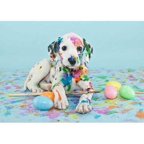 Happy your Easter is as colorful and fun as this guy. Brightest blessings and love to all. #HappyEaster! #Easter #eastersunday #blessings #color #joy #love #happyegghunting