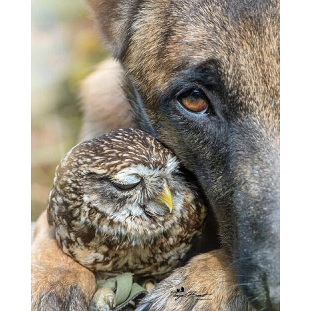 Love comes in all shapes, sizes and forms not matter race, gender o specie. We could learn from these two! ? #fridaylove #happyfriday @officialpeta