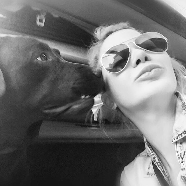Nothing like #puppylove to brighten up ones day when you're not feeling well. He had me at #wuff and lick. He sure is a flirt! #Bosley #alpha #alphadog #labrador #ladiesmanandheknowsit #puppyloveforever @lizrodriguezemr