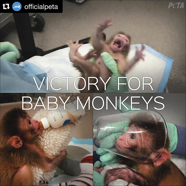 Still a long way to go but this is a sweet victory I celebrate with @officialpeta . Thank you for your hard work! #Repost @officialpeta with @repostapp. ??? VICTORY! #NIH has just announced they will stop abusing & experimenting on baby monkeys! See link in profile for details.