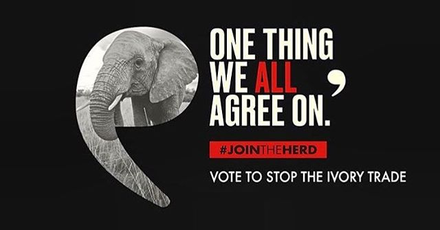 There's one thing we ALL agree on: #JoinTheHerd and stop the ivory trade at @CITES on September 24th. Click on the link in @Wildaid bio to cast your vote! #jointheherd #stoppoaching #endivorytrade #savetheelephants #savetherhinos
