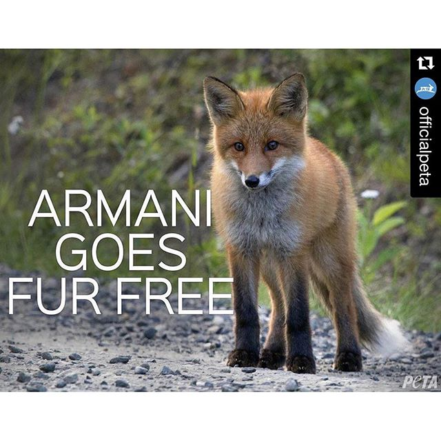 YES!! Thank you @armani for showing true leadership and becoming #crueltyfree #Repost @officialpeta with @repostapp. ??? ICYMI: @Armani to take #fur out of its collections & go #FurFree!
